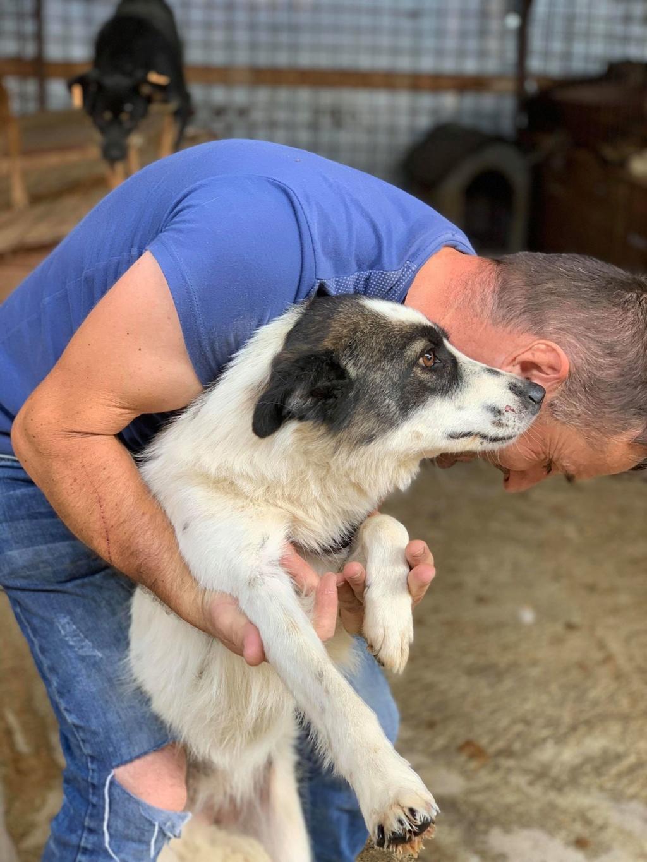 Kona - femelle - fourrière de Târgu Frumos - Réservée adoption (22) 68554010