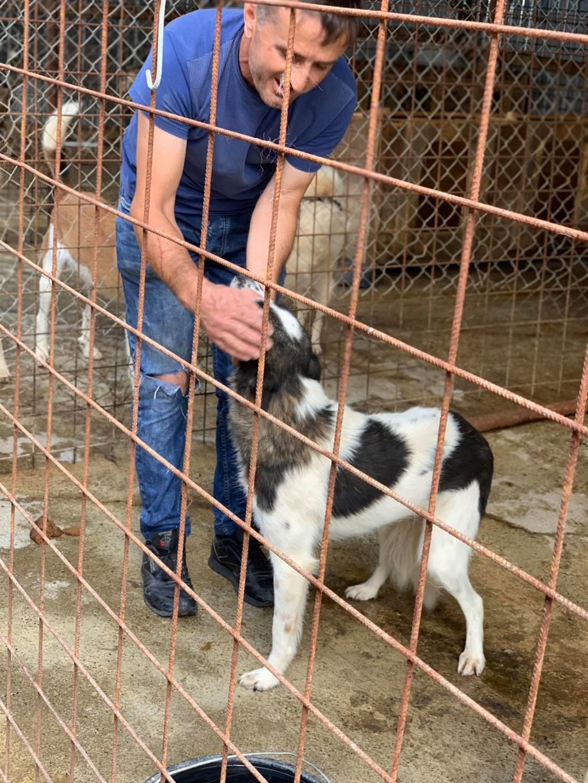 Kona - femelle - fourrière de Târgu Frumos - Réservée adoption (22) 68700110