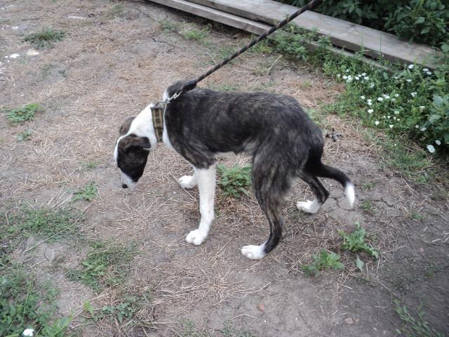 Lola - femelle - refuge d'Arad - réservée adoption (67) - réservée adoption (67) 68720910