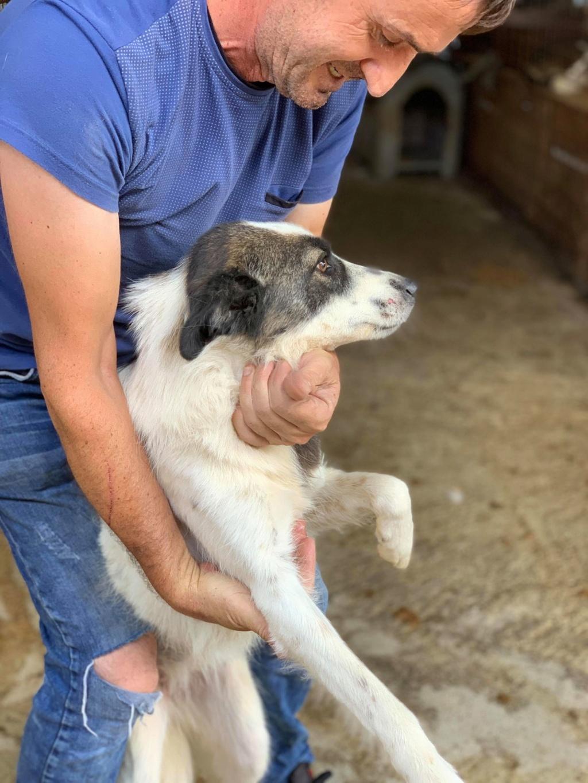 Kona - femelle - fourrière de Târgu Frumos - Réservée adoption (22) 68798010