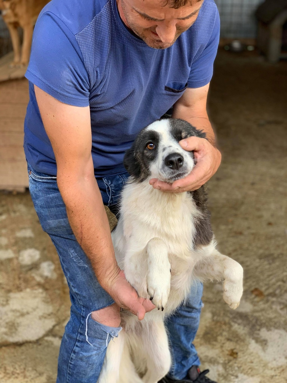 Kona - femelle - fourrière de Târgu Frumos - Réservée adoption (22) 68815410