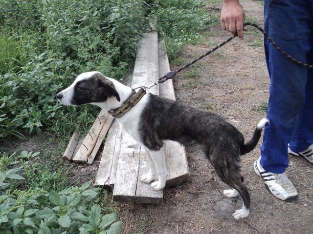 Lola - femelle - refuge d'Arad - réservée adoption (67) - réservée adoption (67) 68936010