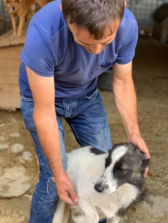 Kona - femelle - fourrière de Târgu Frumos - Réservée adoption (22) 69129710