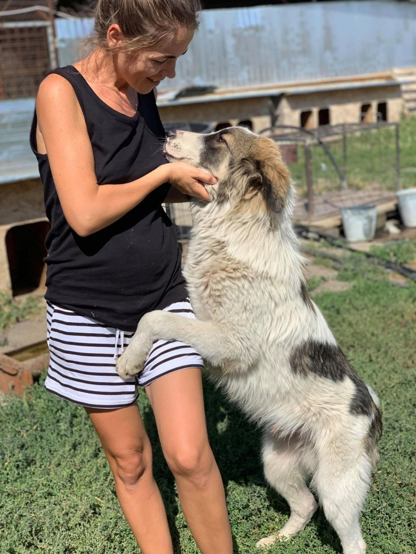 Caporal - mâle - fourrière de Târgu Frumos adopté via andreea 69842110