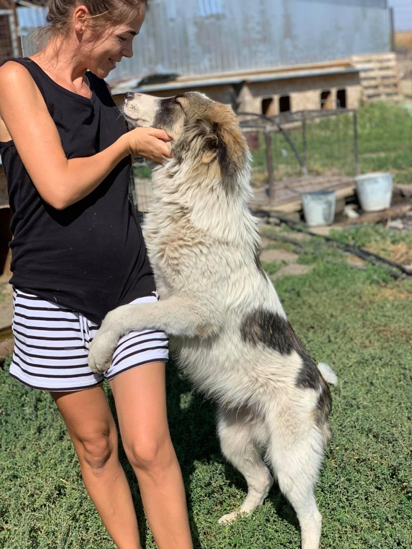 Caporal - mâle - fourrière de Târgu Frumos adopté via andreea 69870010