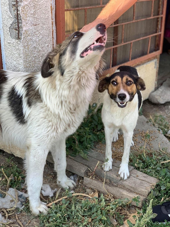 Caporal - mâle - fourrière de Târgu Frumos adopté via andreea 69927010