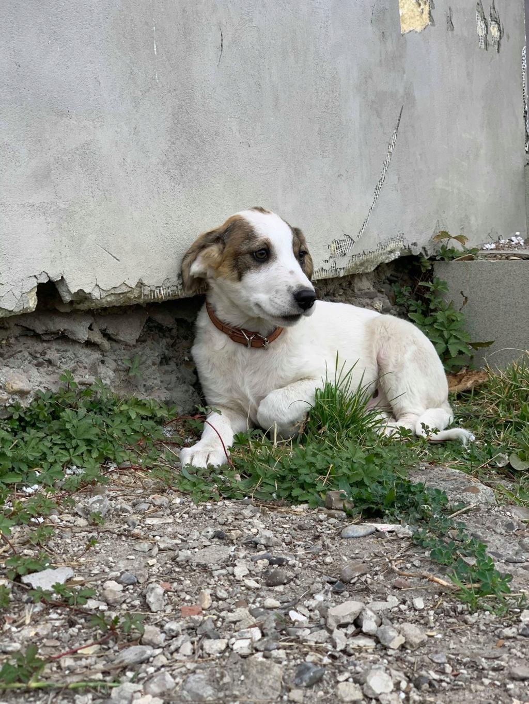 Arlito- mâle- à l'ancienne boulangerie de Târgu Frumos - adopté via Andreea 70161510