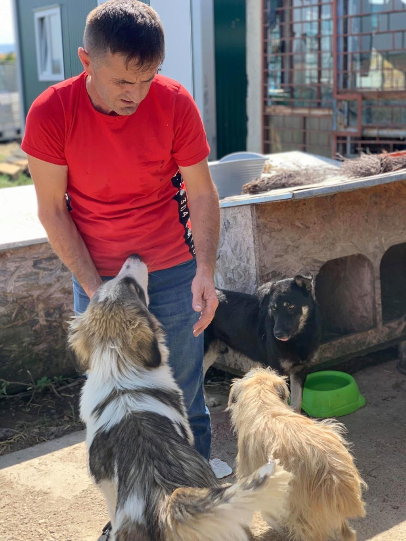 Caporal - mâle - fourrière de Târgu Frumos adopté via andreea 70237010