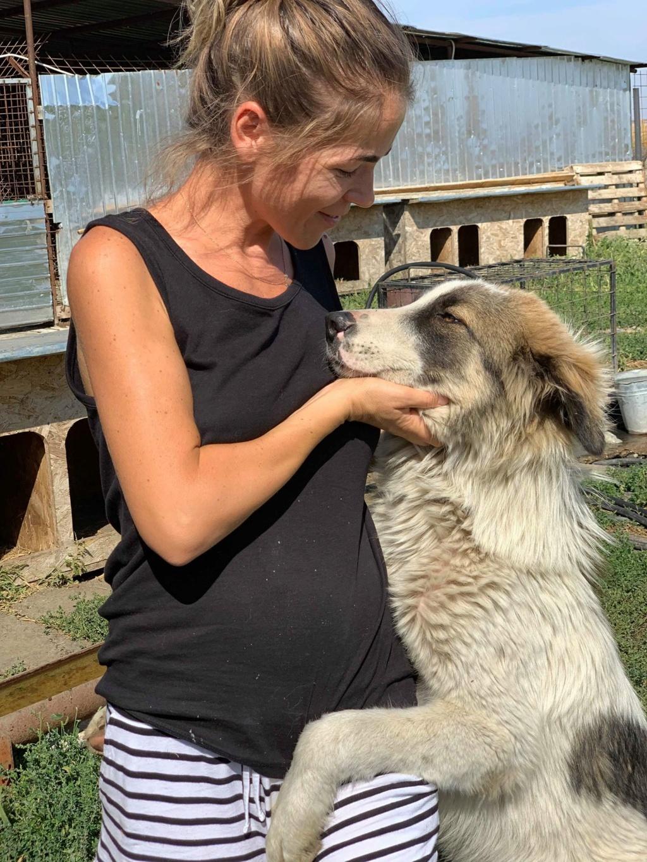 Caporal - mâle - fourrière de Târgu Frumos adopté via andreea 70317010