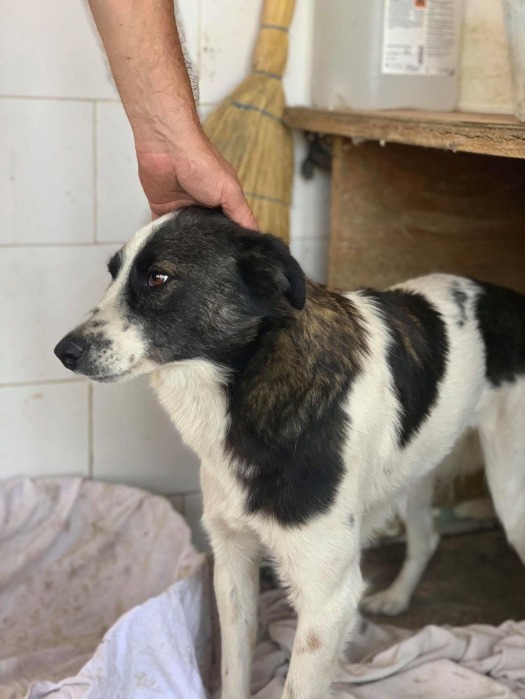 Kona - femelle - fourrière de Târgu Frumos - Réservée adoption (22) 70673910