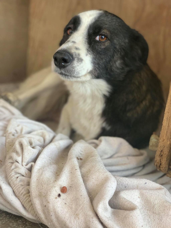 Kona - femelle - fourrière de Târgu Frumos - Réservée adoption (22) 70893410
