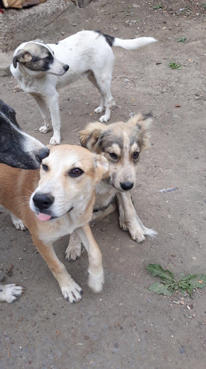 Hélios-mâle- fourrière de Târgu Frumos - adopté via Andreea 71401710