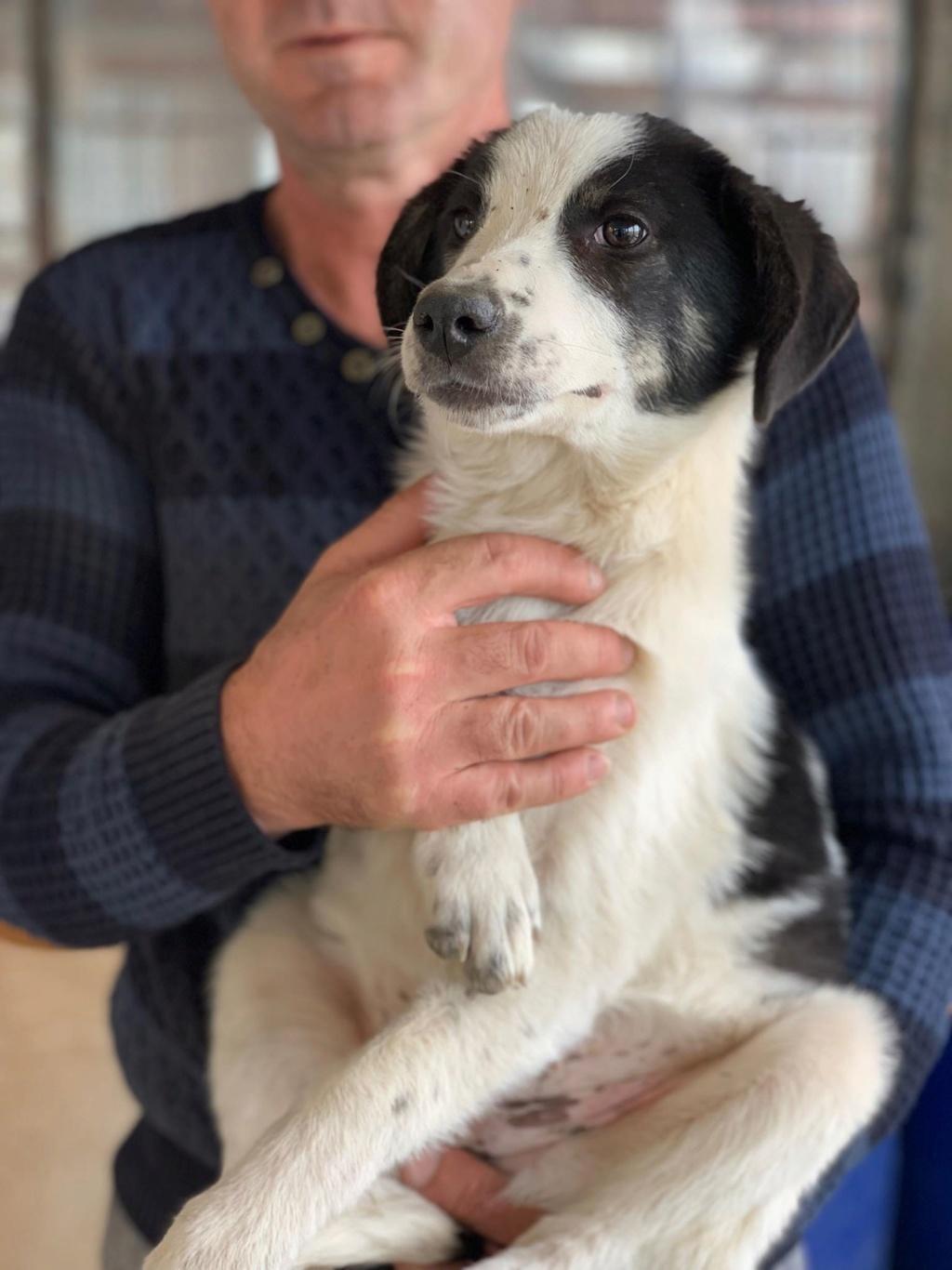 Miacara- femelle- fourrière de Târgu Frumos - adoptée via Andreea 72664310