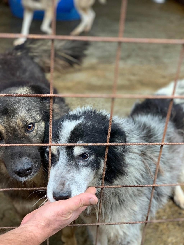 Colorado - mâle - Fourrière de Târgu Frumos - frais d'adoption réduits 73036310