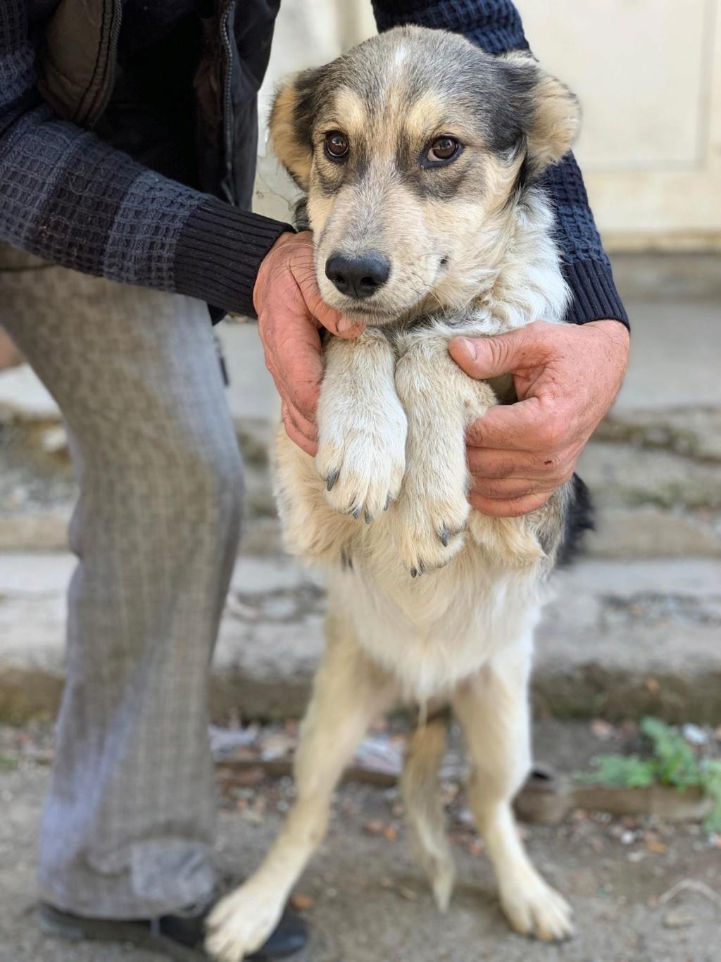 Hélios-mâle- fourrière de Târgu Frumos - adopté via Andreea 73116110