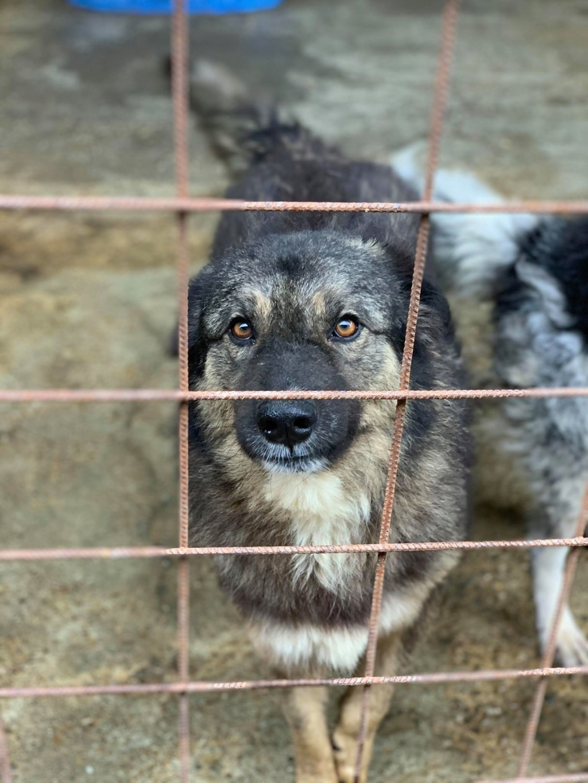 Colorado - mâle - Fourrière de Târgu Frumos - frais d'adoption réduits 73475010