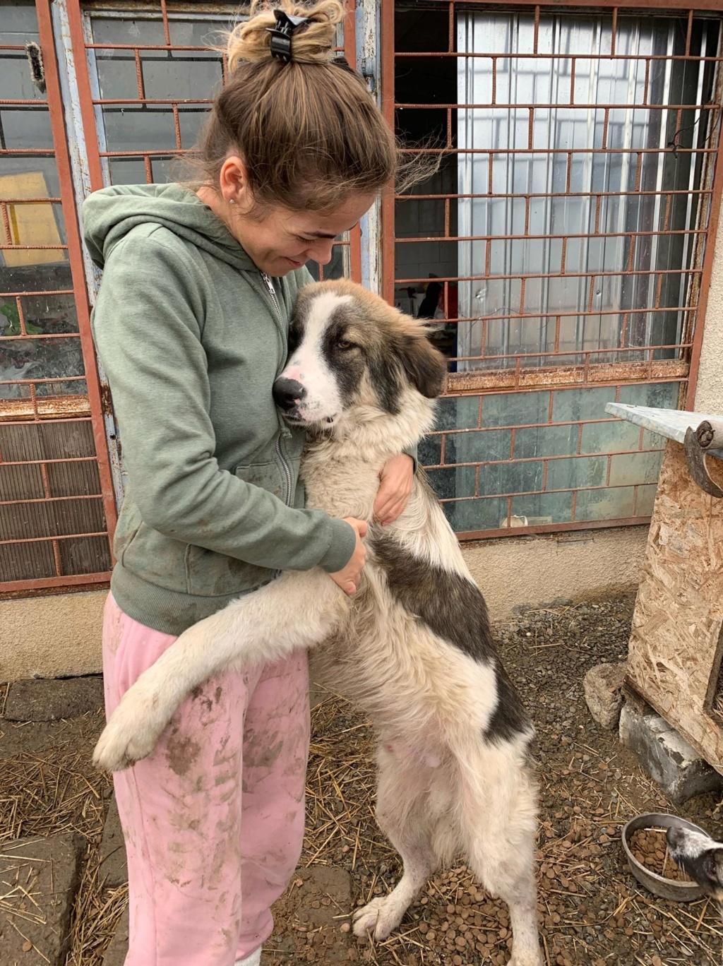 Caporal - mâle - fourrière de Târgu Frumos adopté via andreea 73523410