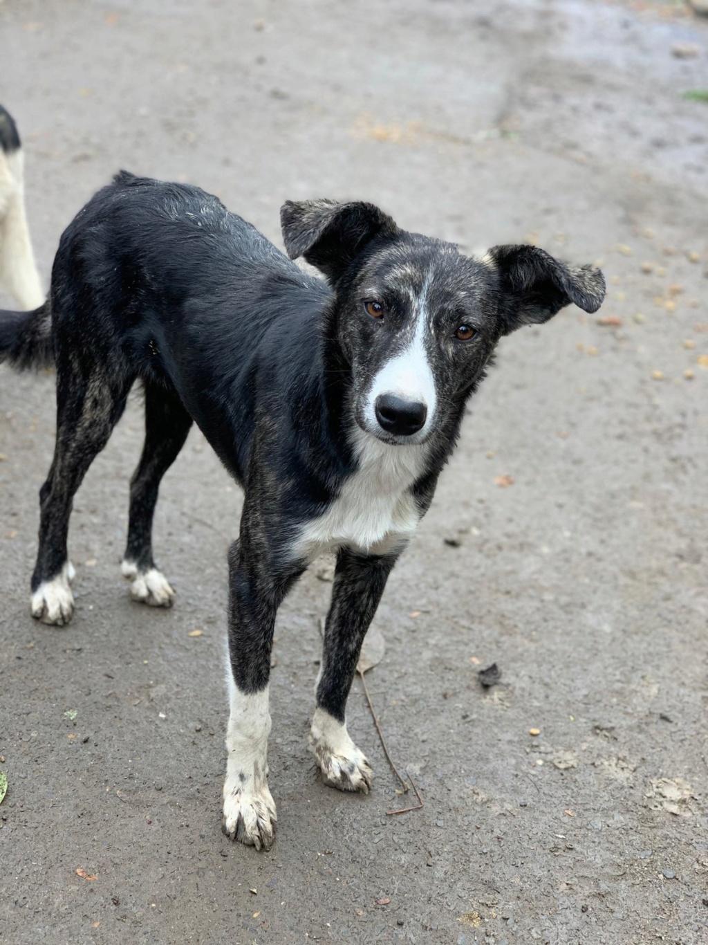 Humphrey - mâle - fourrière de Târgu Frumos - adopté via Andreea 74429410