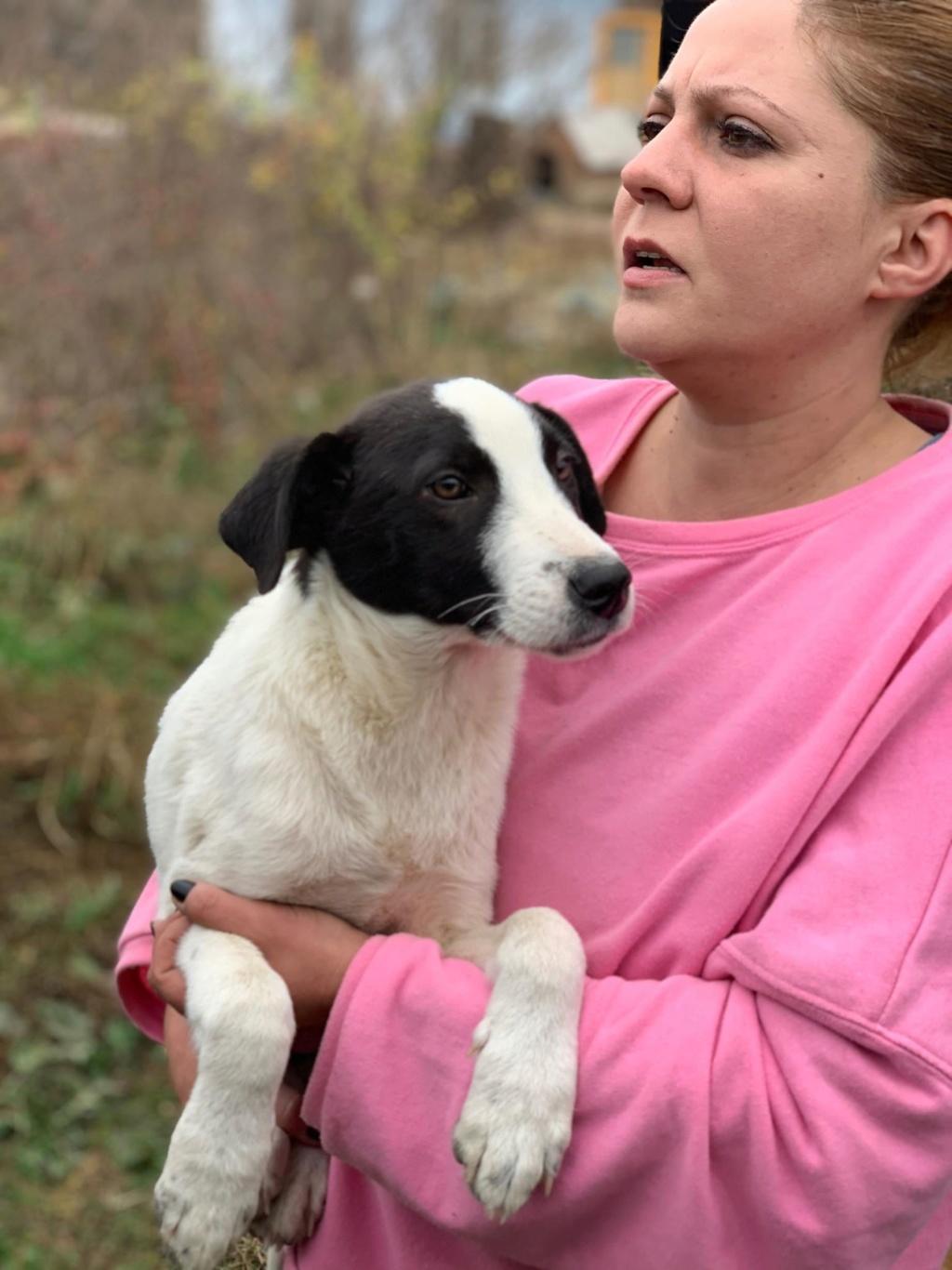 Pongo-mâle- fourrière de Târgu Frumos - adopté via Andreea 74433510