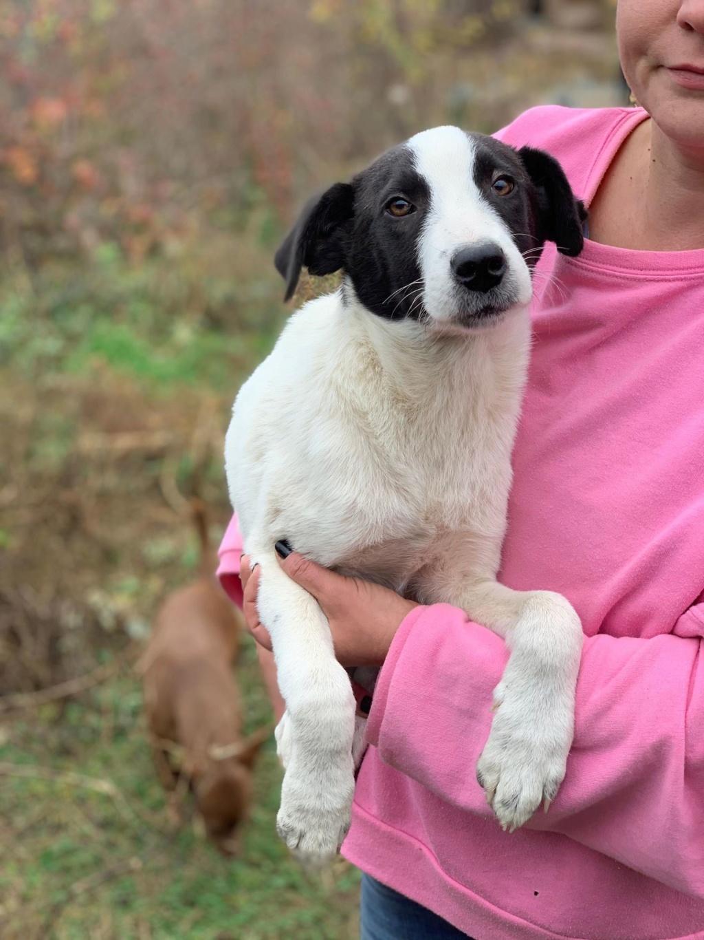 Pongo-mâle- fourrière de Târgu Frumos - adopté via Andreea 74496110