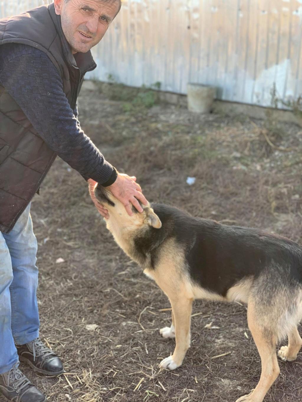 Brisco- mâle- fourrière de Târgu Frumos - demande en cours 74522510