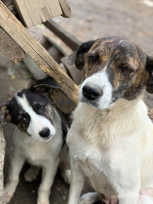Nirvana- femelle- fourrière de Târgu Frumos - adoptée via Andreea 74525710