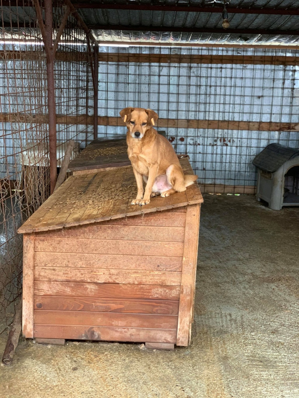 Cosmo - mâle - fourrière de Târgu Frumos - Réservé adoption (68) 74596110