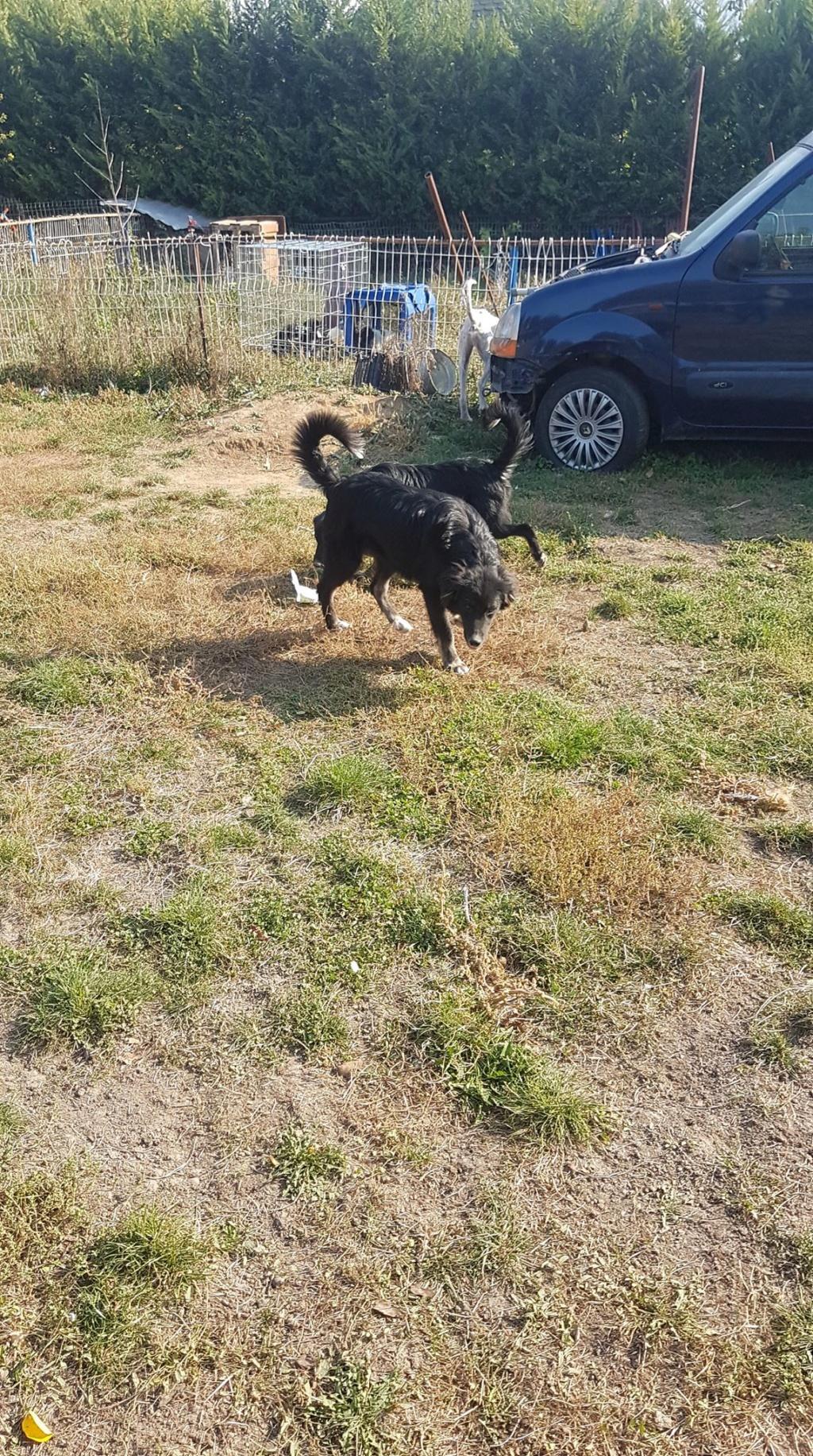 Yukon - Mâle - Refuge d'Arad - Réservé adoption (68) 74692510