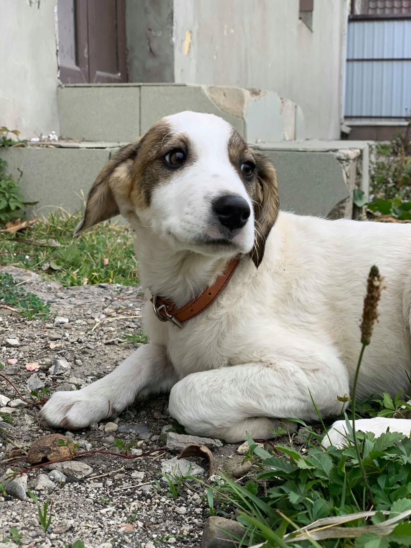 Arlito- mâle- à l'ancienne boulangerie de Târgu Frumos - adopté via Andreea 74866310