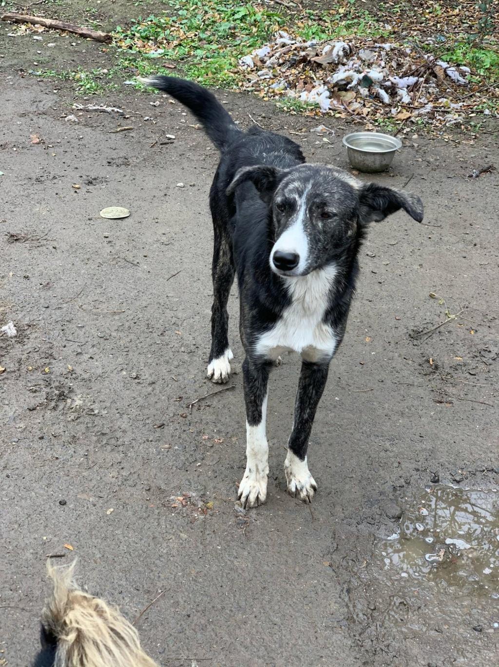 Humphrey - mâle - fourrière de Târgu Frumos - adopté via Andreea 74880610