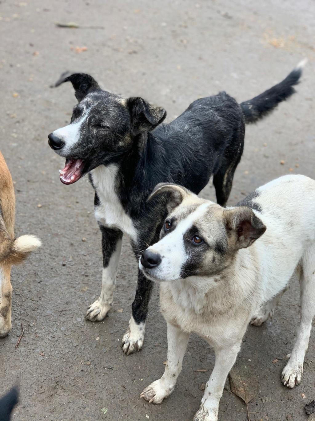 Humphrey - mâle - fourrière de Târgu Frumos - adopté via Andreea 75513310