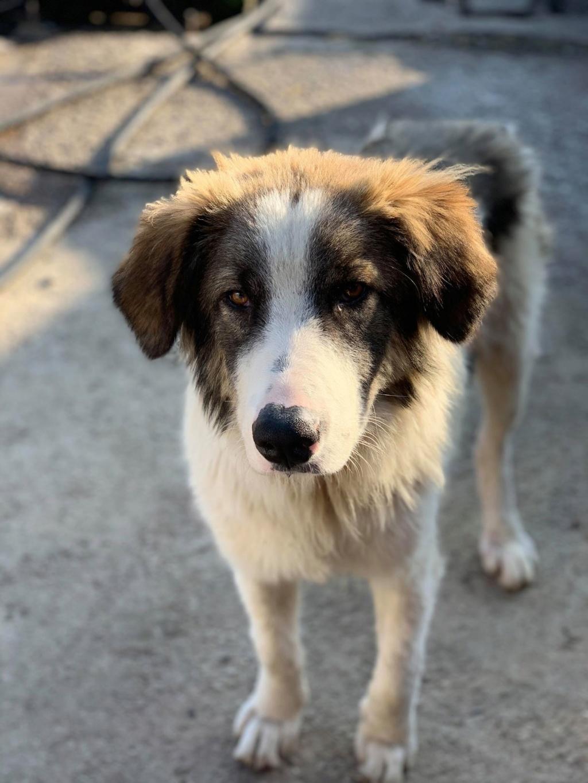 Caporal - mâle - fourrière de Târgu Frumos adopté via andreea 75521910