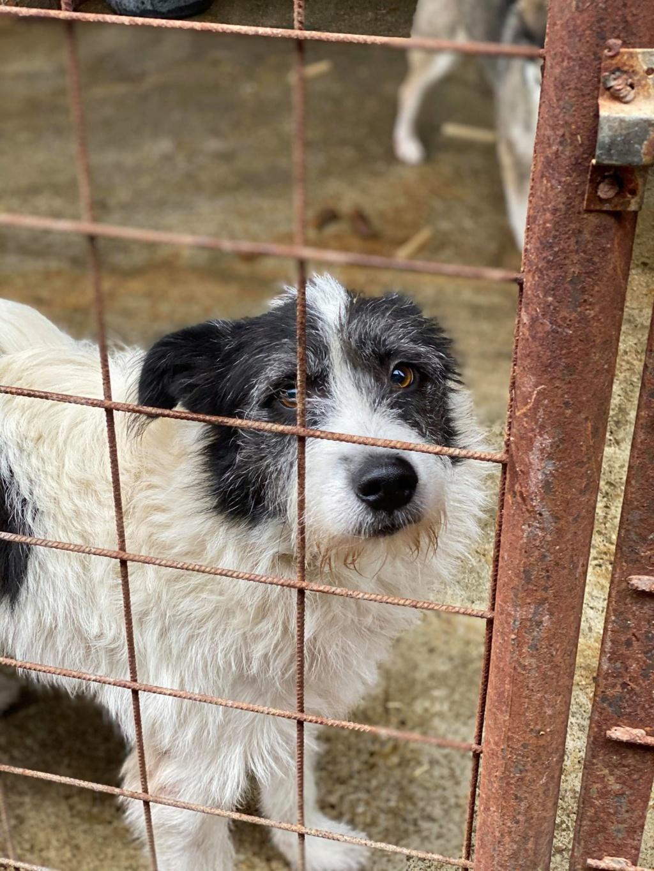 Garick- mâle- fourrière de Târgu Frumos - adopté via Andreea 75565610