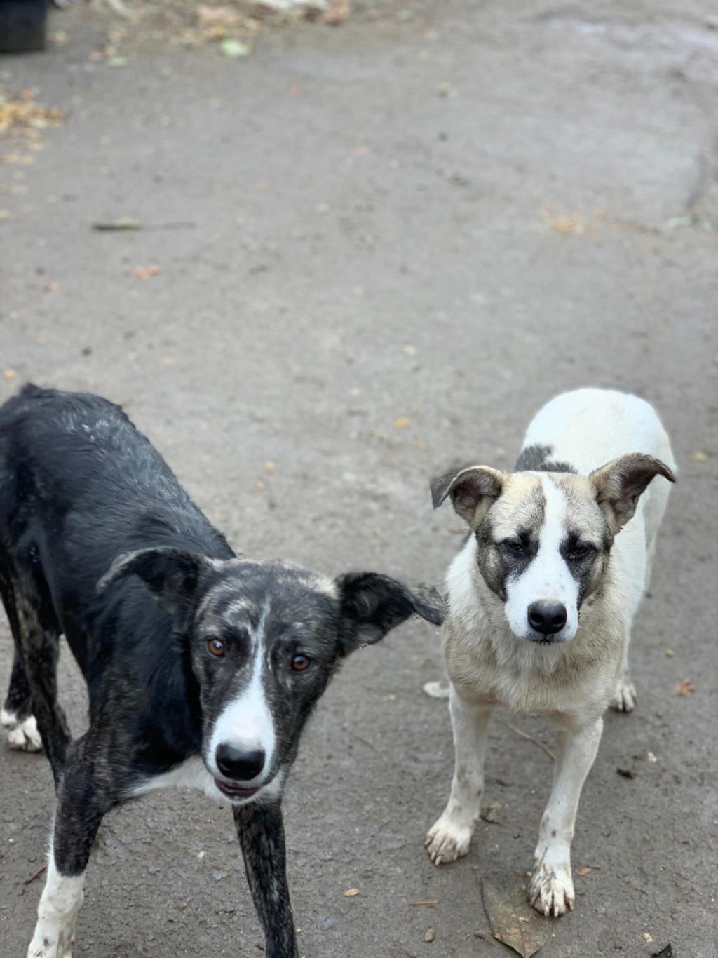 Humphrey - mâle - fourrière de Târgu Frumos - adopté via Andreea 75594510