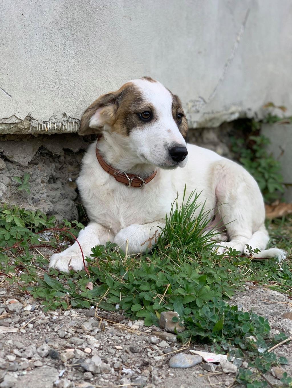Arlito- mâle- à l'ancienne boulangerie de Târgu Frumos - adopté via Andreea 76779511