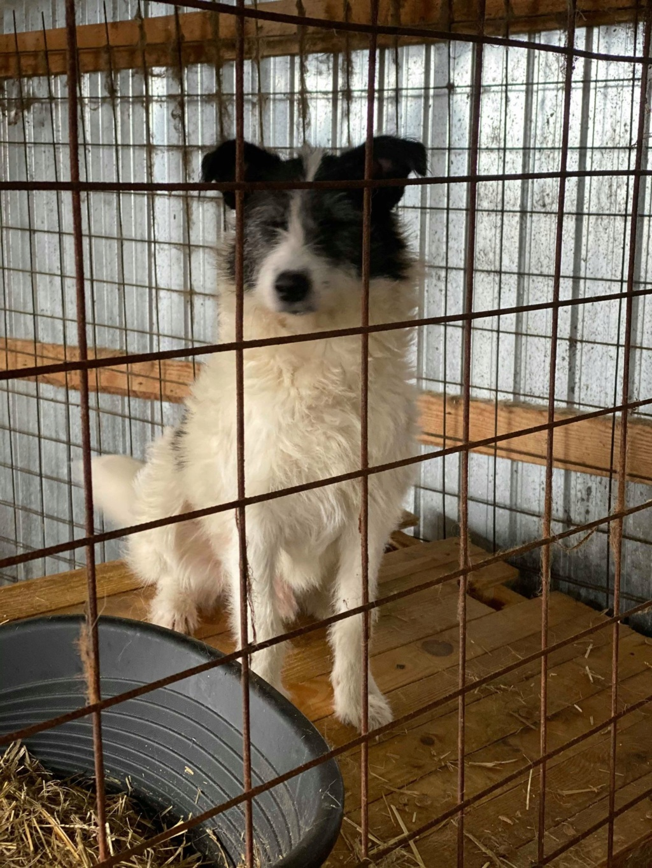 Garick- mâle- fourrière de Târgu Frumos - adopté via Andreea 76900410