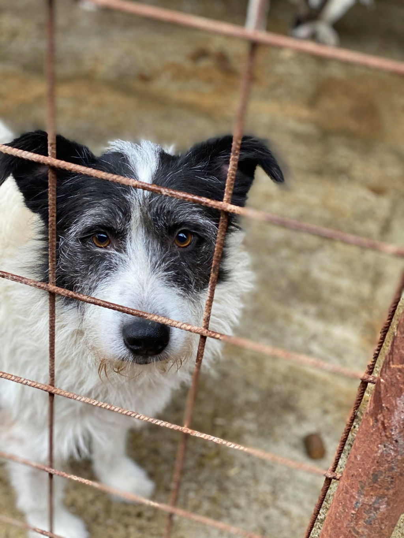 Garick- mâle- fourrière de Târgu Frumos - adopté via Andreea 77315310