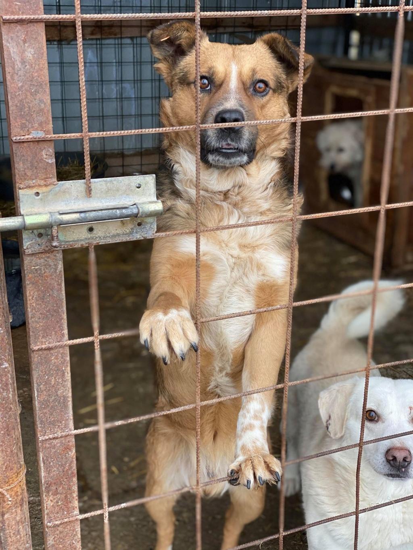 Hercule-mâle- fourrière de Târgu Frumos - adopté via Andreea 78235411