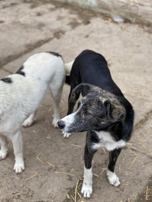 Humphrey - mâle - fourrière de Târgu Frumos - adopté via Andreea 78251010