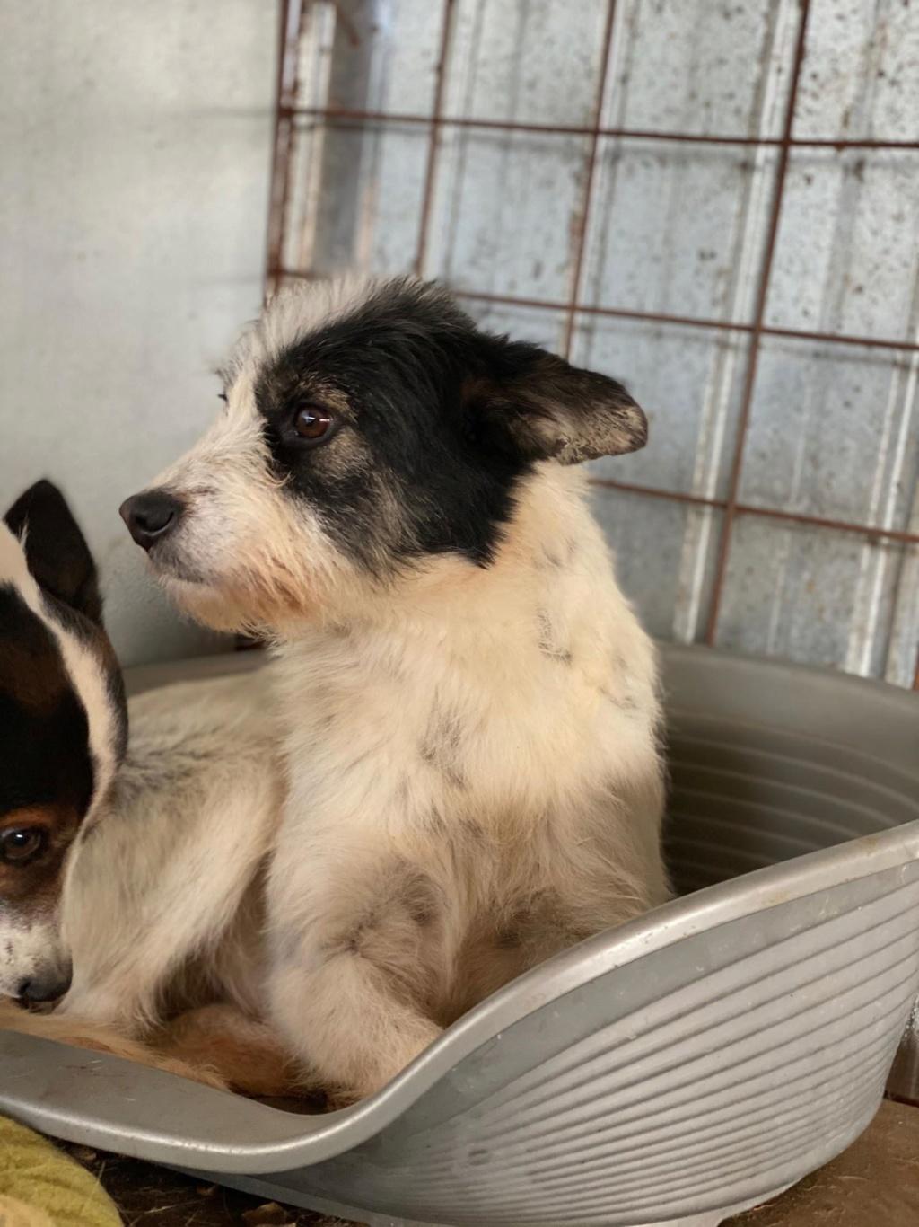 Betty-femelle- fourrière de Târgu Frumos - Adoptée via Andreea  78499310