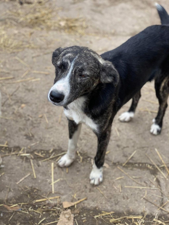 Humphrey - mâle - fourrière de Târgu Frumos - adopté via Andreea 78619210