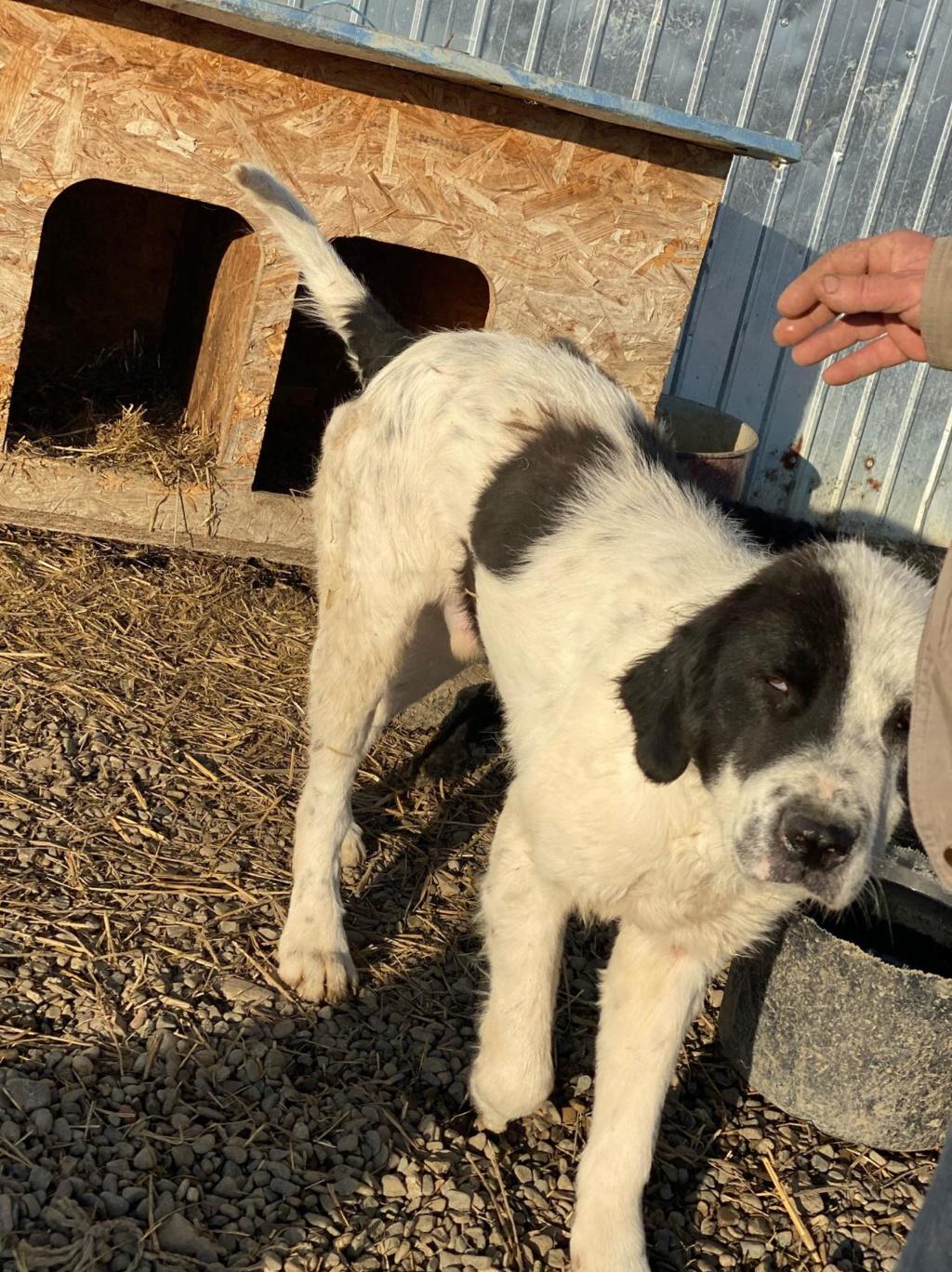 Onyx- mâle- fourrière de Târgu Frumos  adopté via andreea 78845510