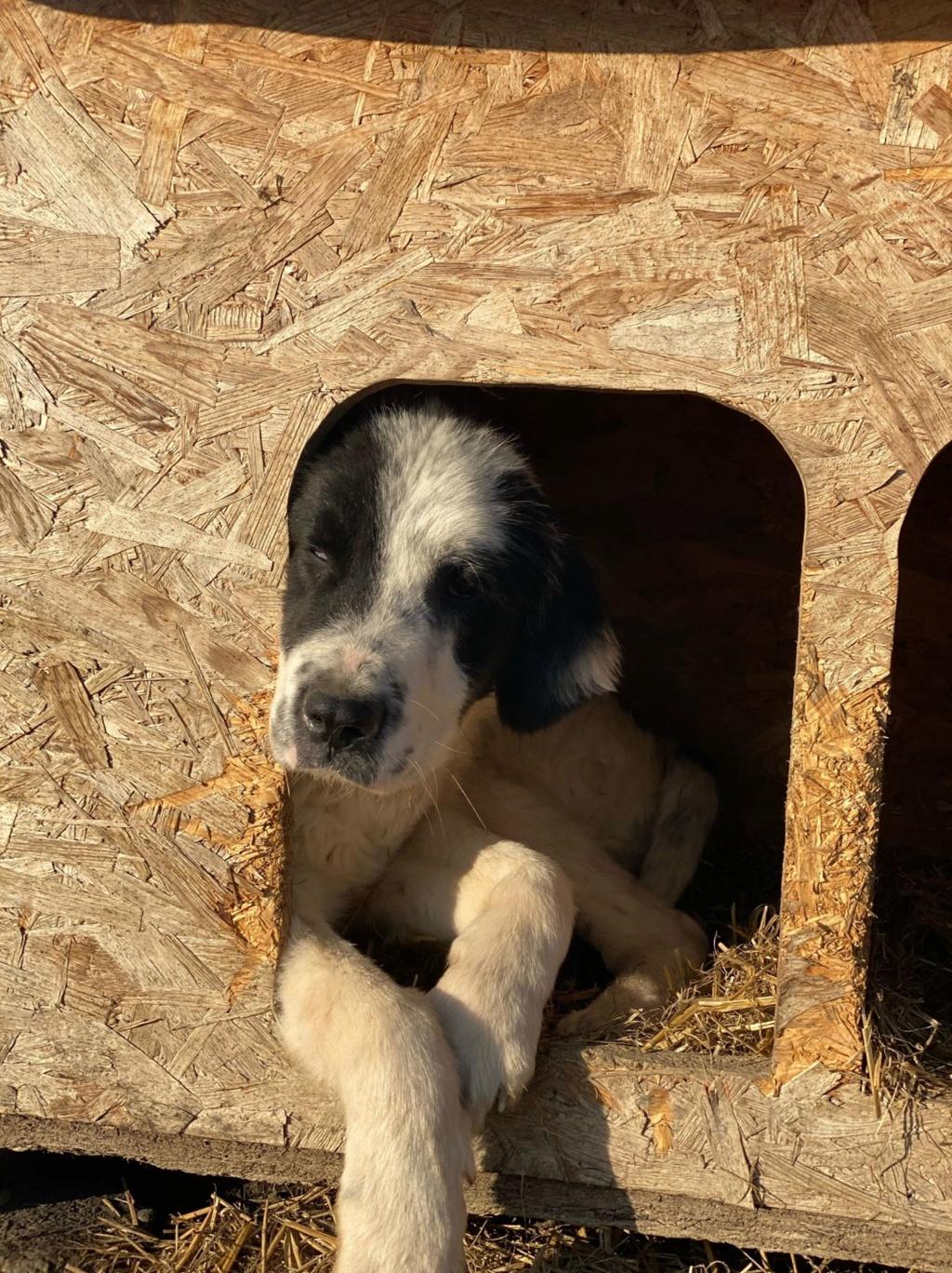 Onyx- mâle- fourrière de Târgu Frumos  adopté via andreea 78970010