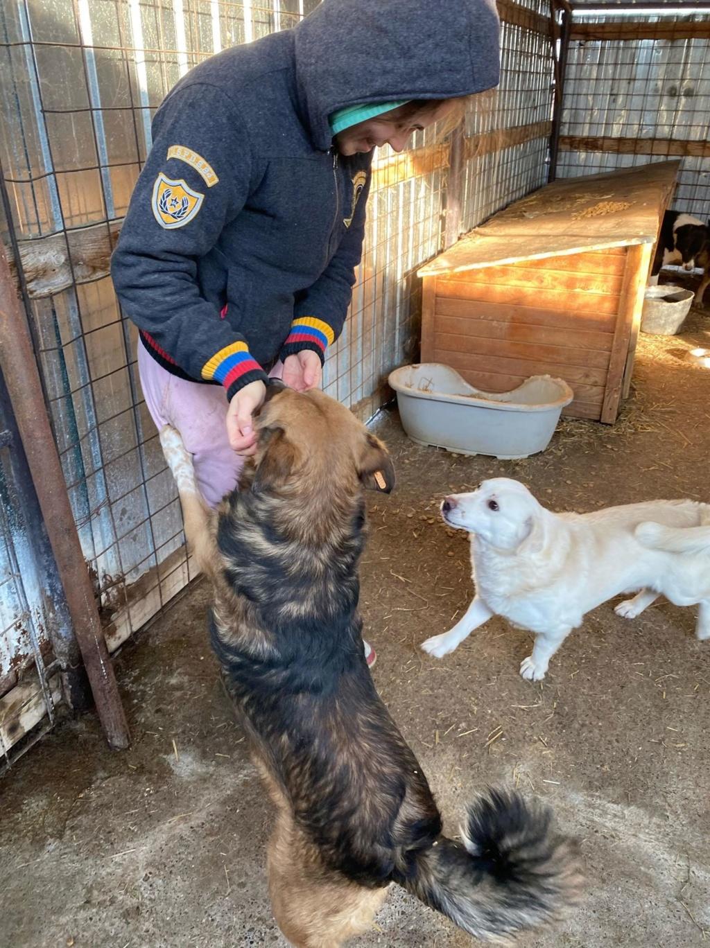 Hercule-mâle- fourrière de Târgu Frumos - adopté via Andreea 79155712