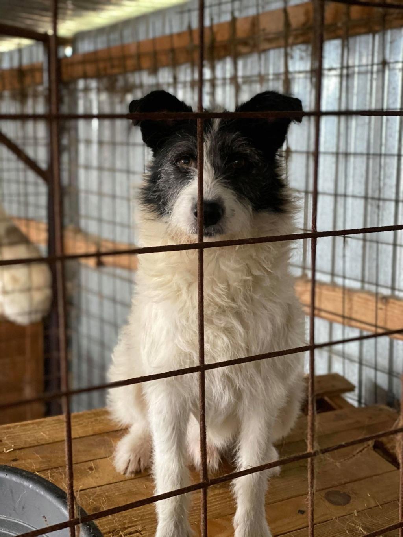 Garick- mâle- fourrière de Târgu Frumos - adopté via Andreea 79170410
