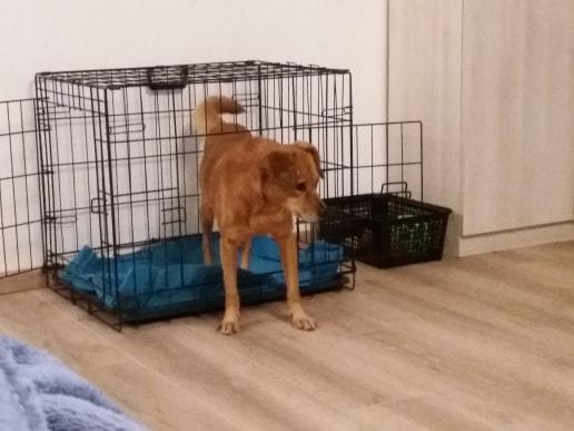 Cosmo - mâle - fourrière de Târgu Frumos - Réservé adoption (68) 79224310
