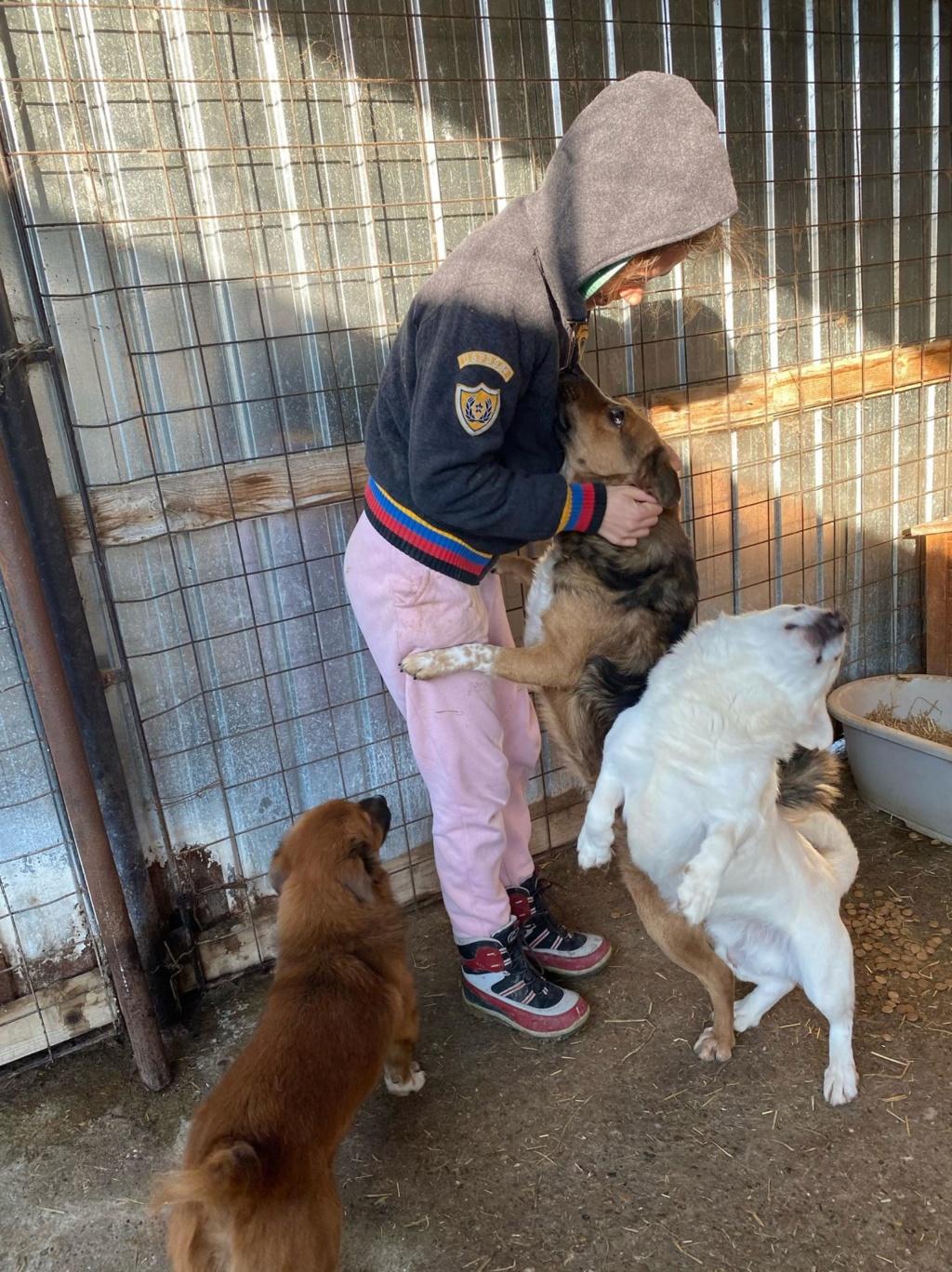 Hercule-mâle- fourrière de Târgu Frumos - adopté via Andreea 79324811