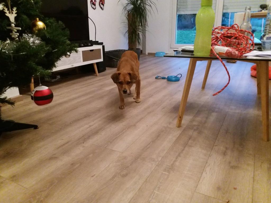 Cosmo - mâle - fourrière de Târgu Frumos - Réservé adoption (68) 79331711
