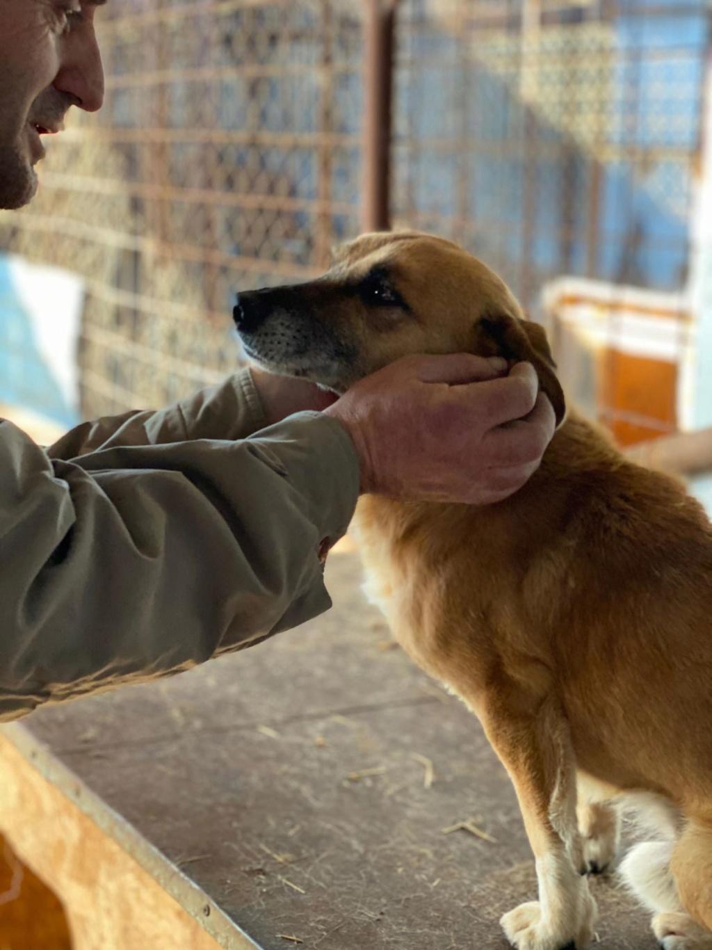 Berlingot- mâle- fourrière de Târgu Frumos - adopté via Andreea 79332410