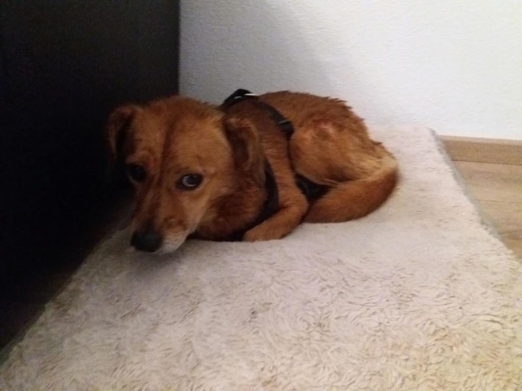 Cosmo - mâle - fourrière de Târgu Frumos - Réservé adoption (68) 79370210